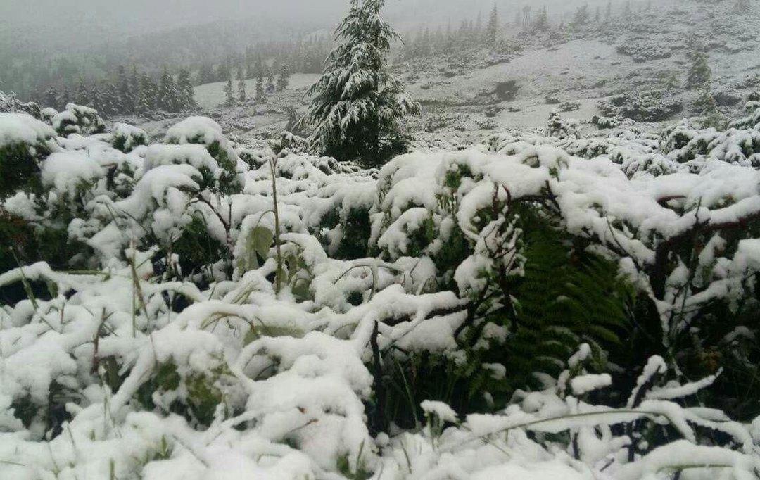 В Карпатах выпал снег, эвакуируют детский лагерь (фото)