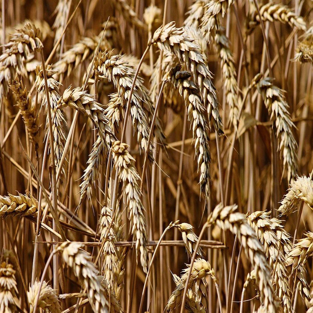 6d57409502dd Топ-10 самых доходных зернотрейдеров Украины - ТОП100  деловой новостной  сайт Дело Украина
