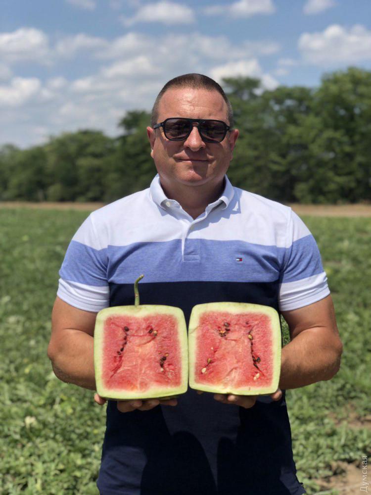 В Украине впервые вырастили квадратные органические арбузы (ФОТО)