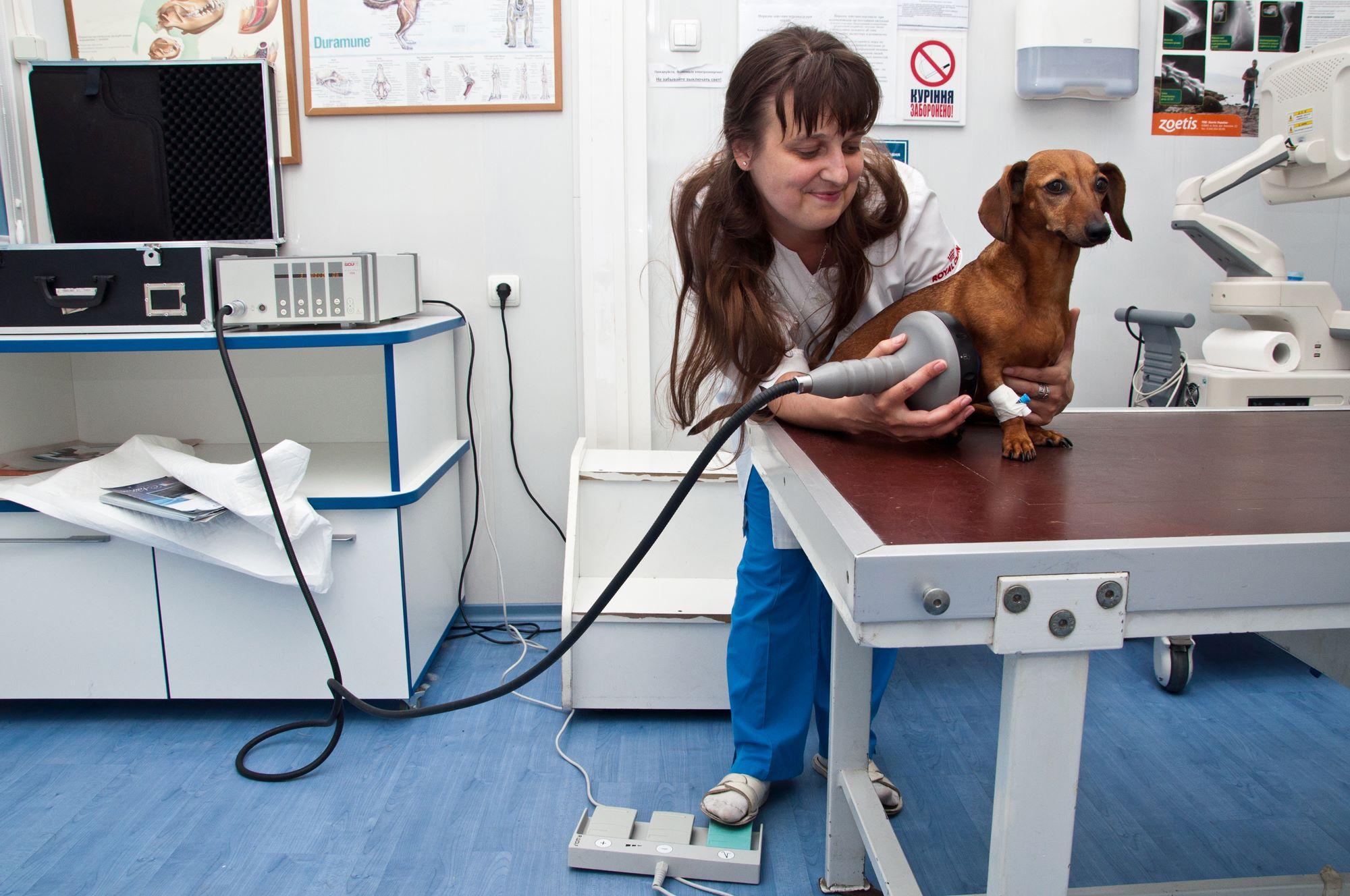 Обучение на ветеринарного врача в украине университетское образование в европе в 19 веке