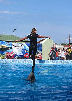 Уникальный номер — дельфин 10 секунд держит человека. дельфинарий в Кирилловке.